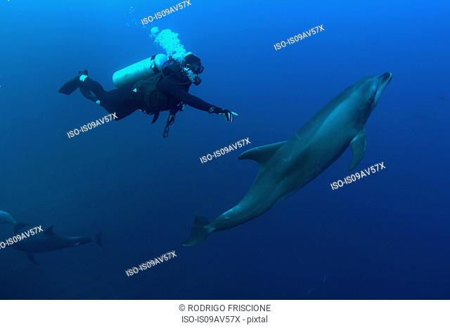 Underwater view of diver reaching for bottlenose dolphin, Revillagigedo Islands, Colima, Mexico
