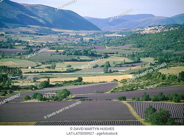 The Nesque valley. View over valley with lavender fields. Mountains in distance. Vaucluse