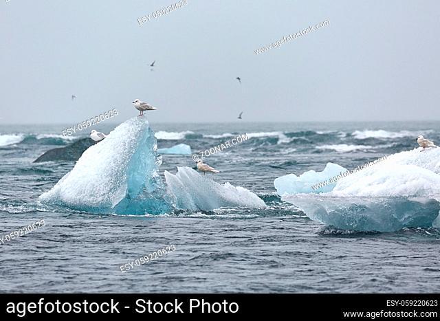 Iceberg in the sea at Icelandic shores