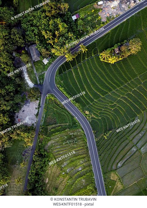 Indonesia, Bali, Aerial view of rice fields