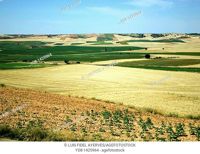 Panoramic view of an agricultural area in Valencia, Spain