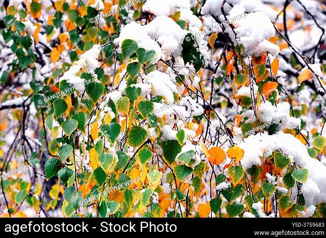 Park scene in winter, Park de Budé, Geneva, Switzerland, Europe