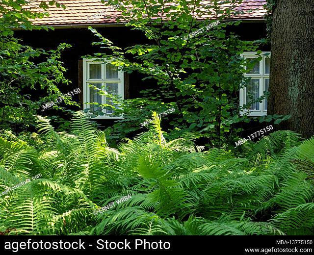 Fern in front of wooden house in Leipe, Innerer Spreewald near Lübbenau, Biosphere Reserve, Brandenburg, Germany