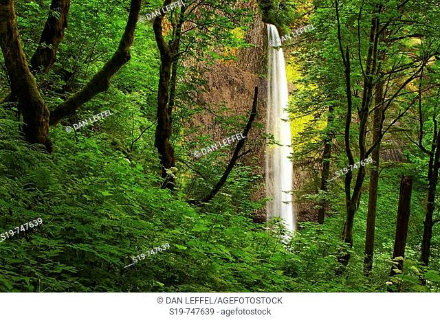 Waterfall, Columbia River Gorge, Oregon, USA