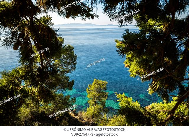 Mediterranean Sea and pines, Corniche des Maures. Le Lavandou. Var department, Provence Alpes Cote d'Azur. French Riviera. France. Europe