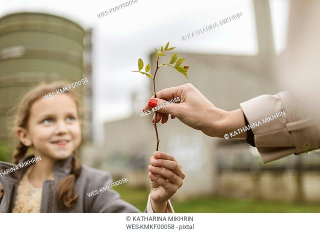 Mother's hand taking twig from her daughter