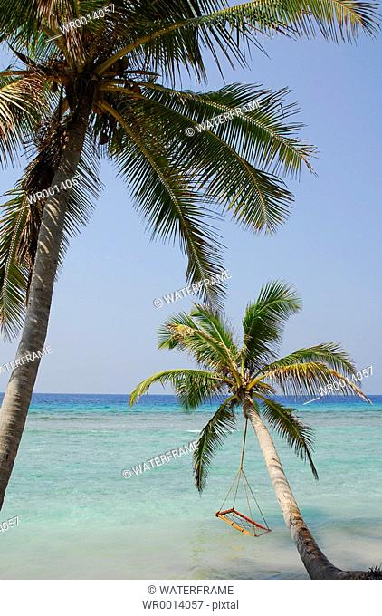 Palm tree Beach, Indian Ocean, Maldives