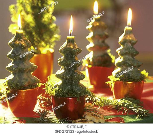 Fir tree candles