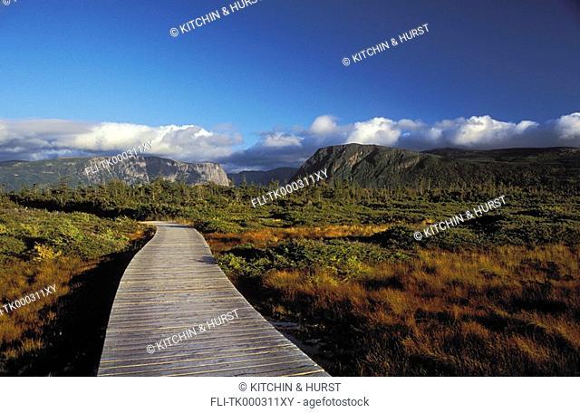 Boreal Forest sphagnum bog  Black spruce, tamarack, mosses, rushes  Western Brook Pond  Gros Morne National Park, Newfoundland