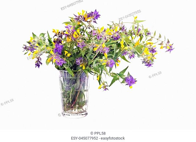 Bouquet of flowers Ivan-da-Marya in glass isolated on white background