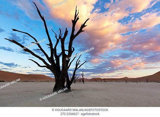 Landscape photo of a dead tree under a colourful sunrise sky. deadvlei, Namib Naukluft National Park, Namibia