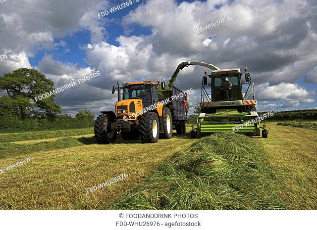 Silaging with a self propelled harvester, Cumbria