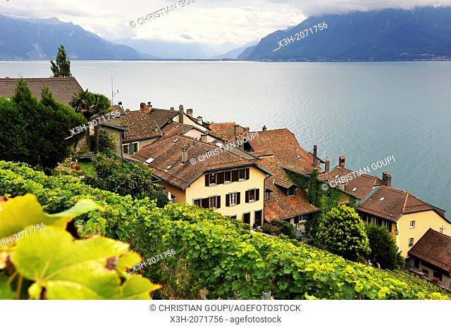 medieval village of Saint-Saphorin in the middle of Vineyard terraces of Lavaux on the bank of Leman Lake, around Lausanne, Canton of Vaud, Switzerland, Europe