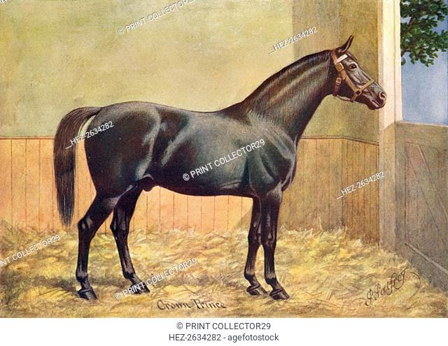 Yorkshire Coach Horse stallion Crown Prince, 1902 (c1910). Artist: Henry Powell Palfrey
