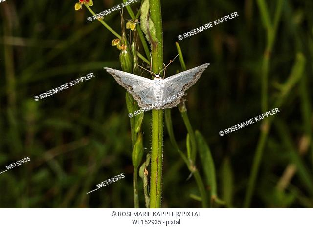 A lace border is sitting on a grass-stock