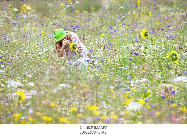Girl bending and taking photograph of sunflower in field of wildflowers