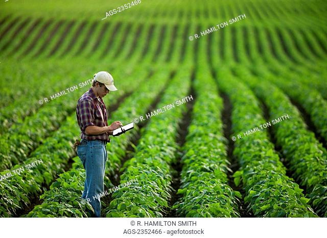 Agriculture - A young farmer in a mid growth soybean field records crop data on his Apple iPad. This represents the next generation of young farmers using the...