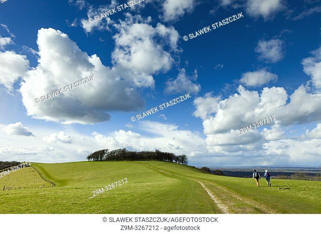 Early spring at Chanctonbury Ring, prehistoric hillfort in South Downs National Park, West Sussex, England