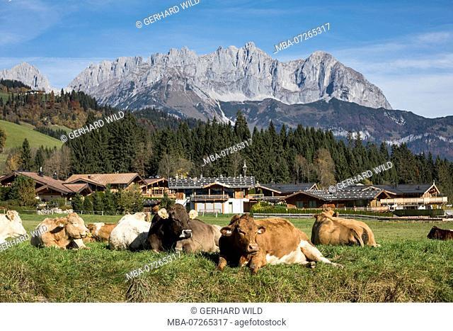 Reith near Kitzbühel, behind the Wilder Kaiser, Kaiser Mountains, Tyrol, Austria