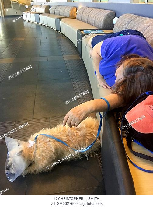 Female dog owner with her pet at a vet clinic, laying down on the seats during a stressful time waiting for her pets operation