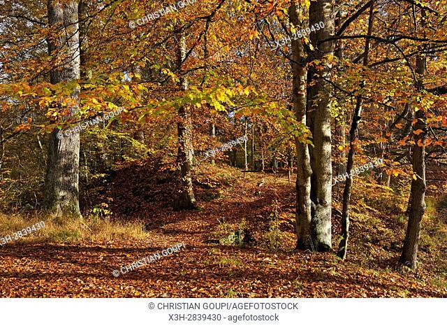 banks of the ''Mares de Vilpert'' (Vilpert's ponds), Forest of Rambouillet, Haute Vallee de Chevreuse Regional Natural Park, Yvelines department