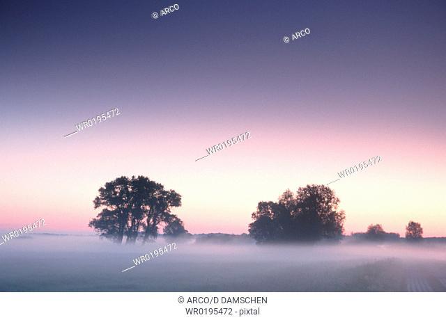 Aspen, in, haze, biosphere, preserve, Elbe, Saxony-Anhalt, Germany, Populus, spec