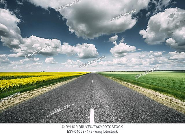 Open Asphalt Countryside Road Through Fields With Yellow Flowering Canola Rapecolza Canola In Spring. Sunny Day White Clouds On Blue Sky