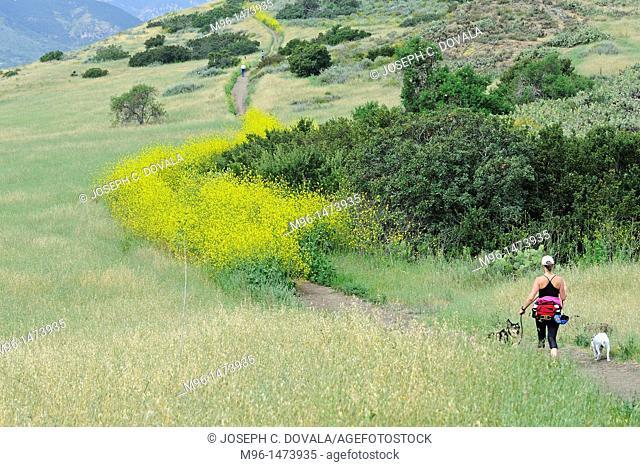 Woman walking dogs in open space, Thousand Oaks, California, USA