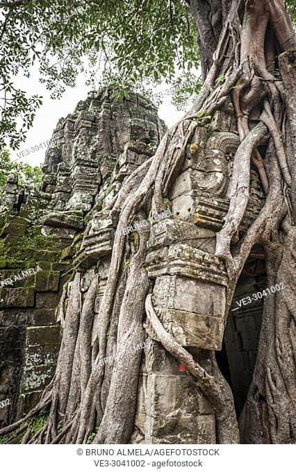 Tree roots growing in the east gate of Ta som Temple in Angkor compound (Siem Reap Province, Cambodia)