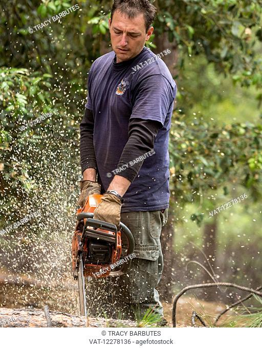 Logger falling trees; Groveland, California, United States of America