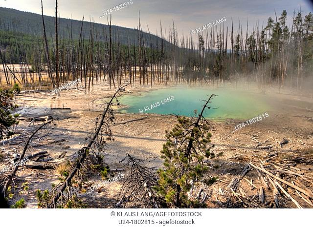 Cistern Spring, Norris Geyser Basin, Yellowstone National Park, Wyoming, USA