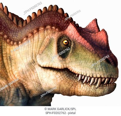 Ceratosaurus head, illustration