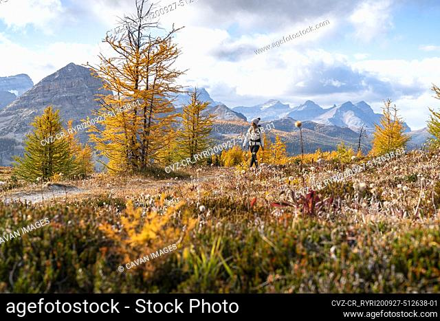 Egypt Meadows Lake Stock Photos And Images Agefotostock