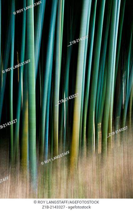 Abstract motion image of a Bamboo forest in Japan
