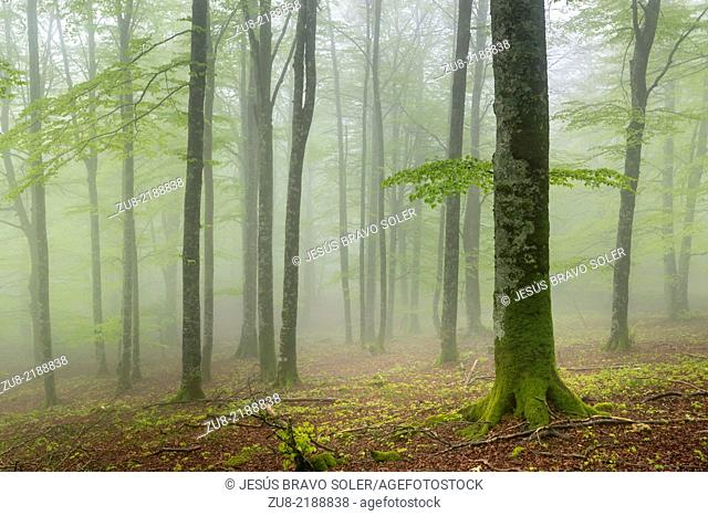 The Enchanted Forest is a beech, in whose ground you can find rocks with suggestive forms. On rainy days, when the fog invades the forest