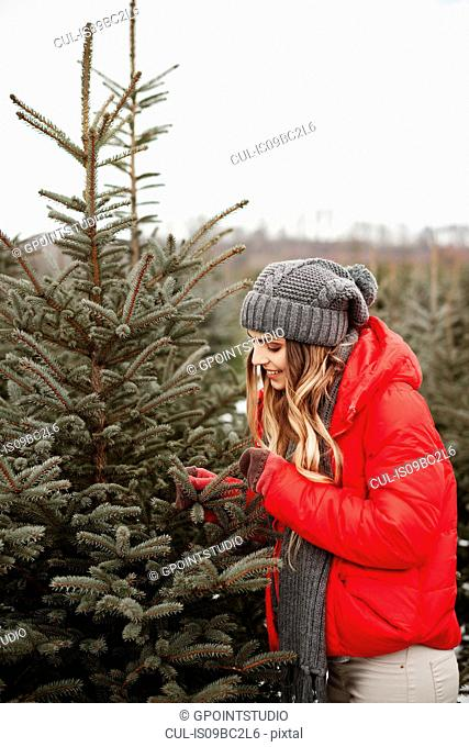 Young woman looking at pine needles while shopping for christmas tree from forest