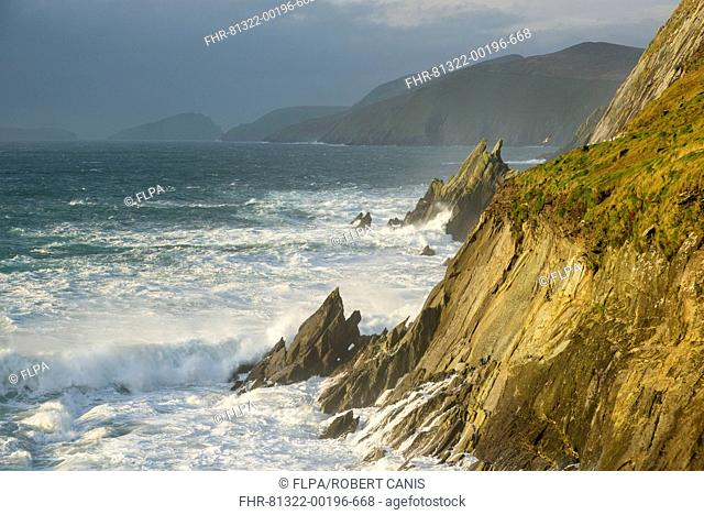 View of swell waves breaking and crashing against cliff at dawn, Coumeenole North, Dingle Peninsula, County Kerry, Munster, Ireland, November