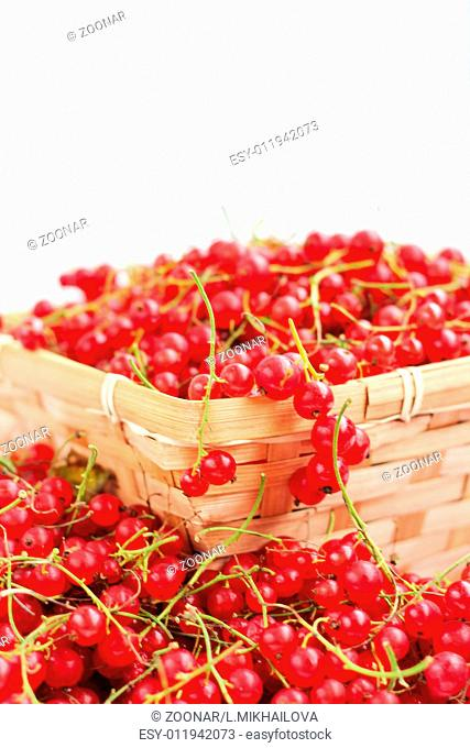 Harvested red currant
