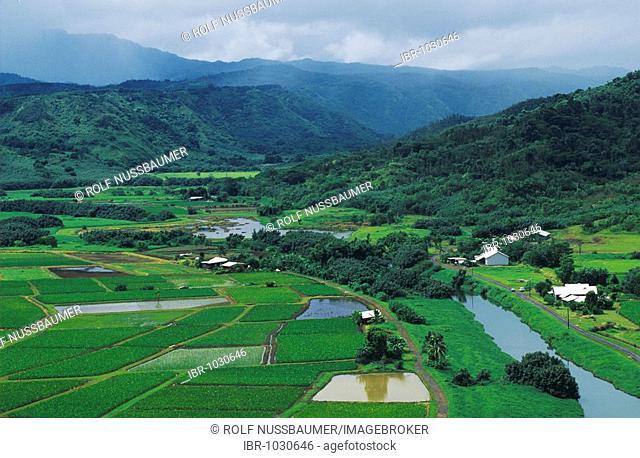 Taro Fields in Hanalei Valley, Hanalei Valley Overlook, Kauai, Hawaii, USA