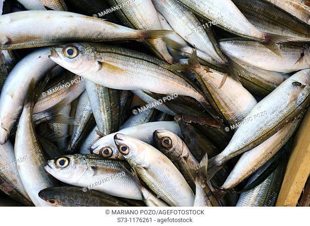Fish in an street market in Santorini, Cyclades Islands, Greece