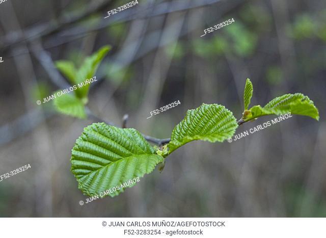 Réserve naturelle nationale Marais d'Orx, Labenne, Landes, Nouvelle-Aquitaine, France, Europe