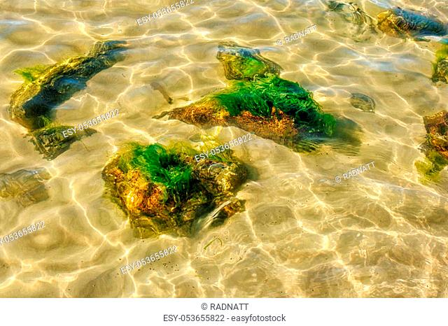 stones overgrown with mud under the water on sunny summer day closeup