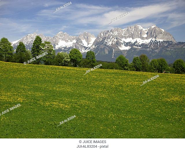 Scenic view of meadow and mountains, Kaisergebirge, Tyrol, Austria