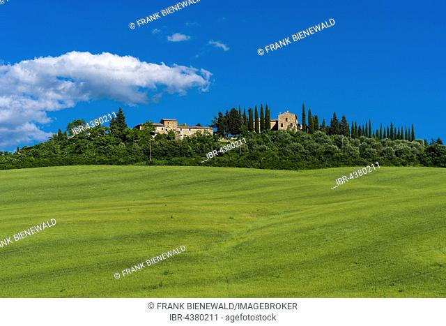 Typical green Tuscan landscape in Val d'Orcia, farm on hill, fields, trees, cypresses and blue cloudy sky, La Foce, Tuscany, Italy