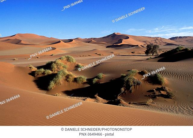 Africa, Namibia, Namib-Naukluft National Park, ancient sand dunes near Sossusvlei and camel thorns