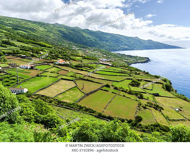 Fields near Ribeiras. Pico Island, an island in the Azores (Ilhas dos Acores) in the Atlantic ocean. The Azores are an autonomous region of Portugal