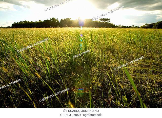 Solar light, Landscape, Corumbá, Mato Grosso do Sul, Brazil
