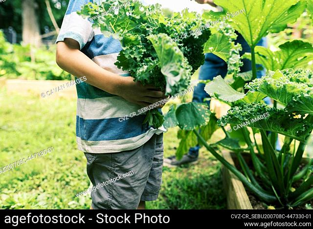 A millennial father and his son harvesting kale for dinner