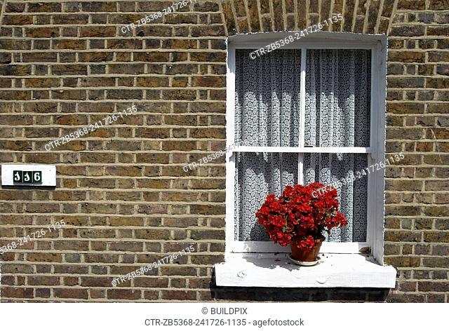 Flower pot on a window sill