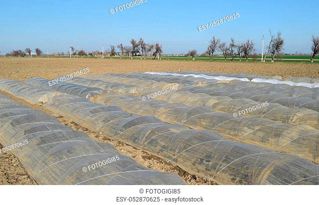 Greenhouses made of polymer film. Early spring in the garden greenhouses